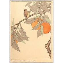 Imao Keinen: Keinen's Bird and Flower Picture Album - Satsuma Orange and Bird - - Artelino