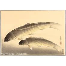 Ono Bakufu: Pictures of Fish in Japan - Carp - Artelino