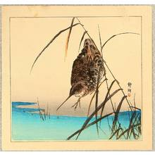 静湖: Snipe in Marsh - Artelino