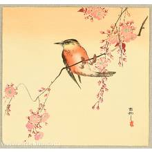 小原古邨: Orange Bird and Cherry Blossoms - Artelino
