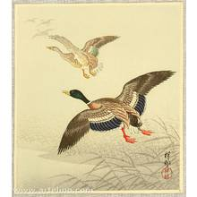 小原古邨: Mallard Taking off from Marsh - Artelino