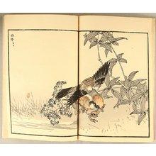 Kono Bairei: Birds and Flowers - book - Artelino