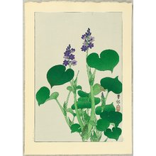 Ohara Koson: Purple Flowering Hosta - Artelino