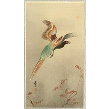 小原古邨: Pheasant in Flight - Artelino