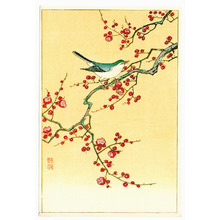 Ohara Koson: Bird and plum tree - Artelino
