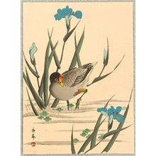 今尾景年: Bird and Iris - Artelino