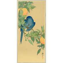 Ito Sozan: Blue Parrot - Artelino