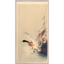 小原古邨: Mallard Flying from a Pond - Artelino
