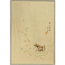 Watanabe Seitei: Frog - Artelino