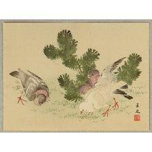無款: Pigeons - Artelino