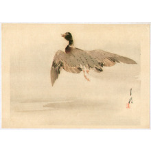 Ogata Gekko: Gekko's Twelve Bird-and-Flower - Flying Mallard - Artelino