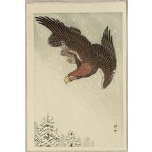 Ohara Koson: Eagle in Flight - Artelino