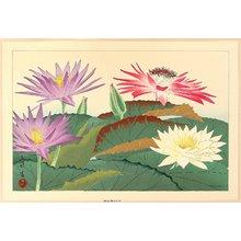 Aoyama Masaharu: Water Lilies - Artelino