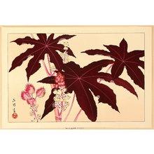 Aoyama Masaharu: Exotic Flower - Artelino
