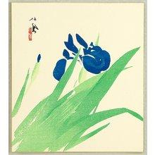 Takeuchi Seiho: Iris - Artelino