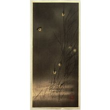Ito Sozan: Fireflies - Artelino