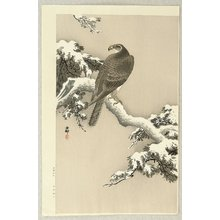 小原古邨: Goshawk on a Snow Covered Pine Branch - Artelino