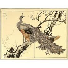 Maekawa Bunrei: Peafowl and Plum Tree - Artelino