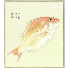 Takeuchi Seiho: Sea Bream - Artelino