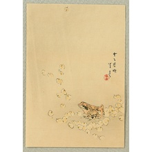 Watanabe Seitei: Frog and Cherry Blossoms - Artelino