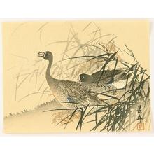 今尾景年: Two Geese - Artelino