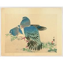 Tanaka Gekko: Doves - Artelino