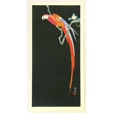 Tsuchiya Koitsu: Macaw in the Dark - Artelino