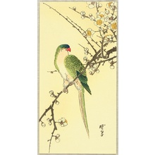 河鍋暁翠: Parrot and Plum - Artelino