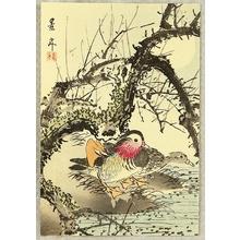 Imao Keinen: Mandarin Ducks - Artelino