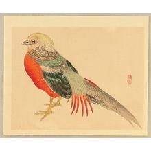 Kono Bairei: Bairei Gadan - Chinese Pheasant - Artelino