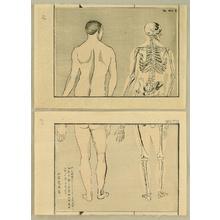Kawanabe Kyosai: Anatomical diptych - 3 - Artelino