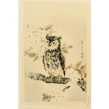 Kotozuka Eiichi: Owl and Cherry Blossoms - Artelino