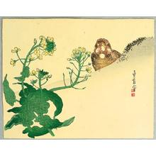 Hasegawa Sadanobu III: Sparrow and Yellow Flower - Artelino