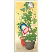 Takahashi Hiroaki: Morning Glories - Artelino