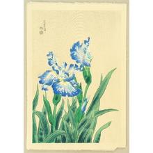Kotozuka Eiichi: Iris - Artelino
