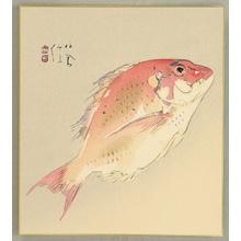 Takeuchi Seiho: Sea Bream - Tai Fish - Artelino