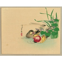 Hasegawa Sadanobu III: Mandarin Ducks - Artelino