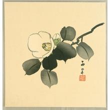 Murayama Koka: Camellia - Artelino