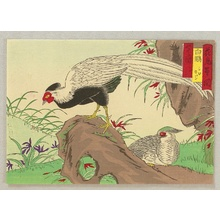 Utagawa Hiroshige III: Bird and Flower - White Pheasants - Artelino