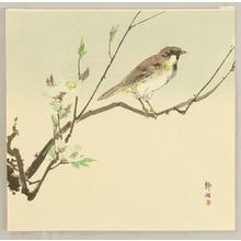無款: Bird and Plum - Artelino