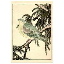 Imao Keinen: Green Bird - Artelino