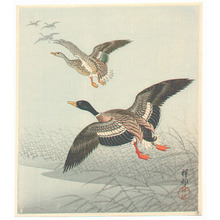 小原古邨: Group of Mallards - Artelino