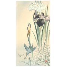 Imao Keinen: Kingfisher and Irises - Artelino