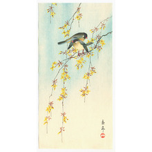Imao Keinen: Two Birds on Yellow Blossom Branches - Artelino