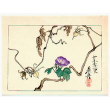 Shibata Zeshin: Morning Glories - Hana Kurabe - Artelino