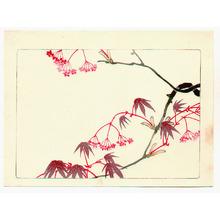 Shibata Zeshin: Red Maple - Hana Kurabe - Artelino