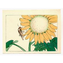 Shibata Zeshin: Sun Flower and Grasshopper - Hana Kurabe - Artelino