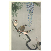 小原古邨: Sparrows and Wisteria (Extra Large) - Artelino