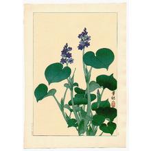 小原古邨: Purple Flowering Hosta (Muller Collection) - Artelino