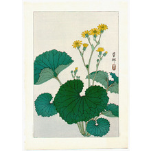 小原古邨: Liqularia (Muller Collection) - Artelino